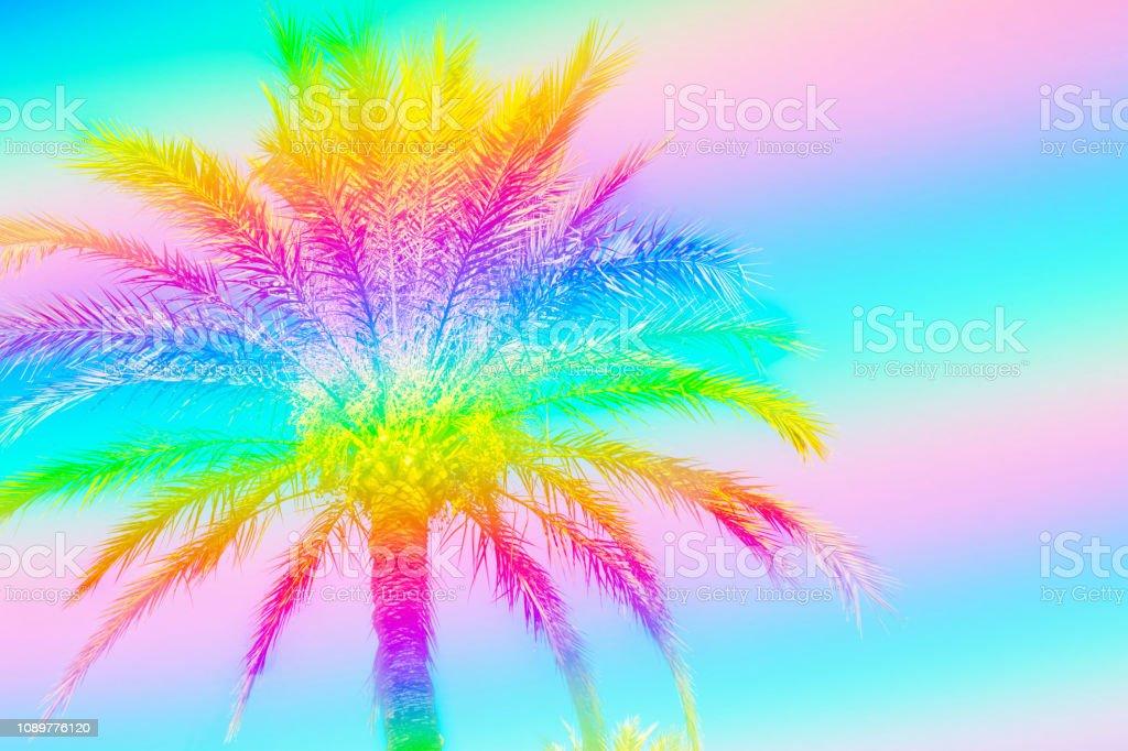 Plumoso Palmera Sobre Fondo De Cielo Entonado En Colores De