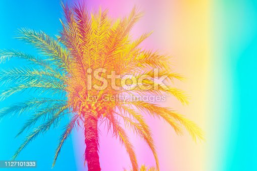 Feathery palm tree on sky background toned in vibrant saturated rainbow neon pastel colors. Surrealistic funky style. Tropical beach vacation wanderlust. Card poster flyer party invitation template