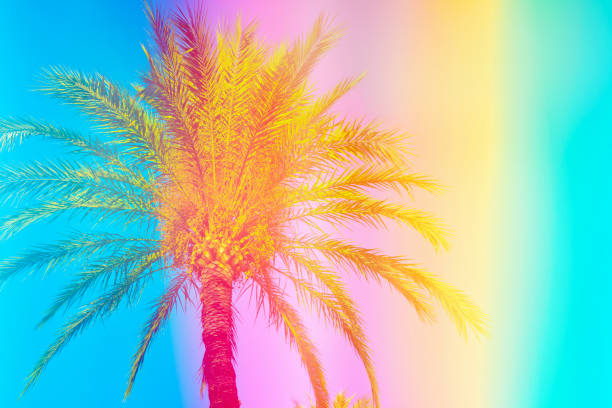 feathery palm tree on sky background toned in vibrant saturated rainbow neon pastel colors. surrealistic funky style. tropical beach vacation wanderlust. card poster flyer party invitation template - saturated color stock pictures, royalty-free photos & images
