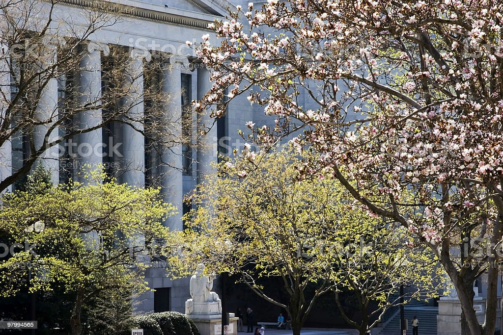 Federal Columns and Spring Blooms royalty free stockfoto
