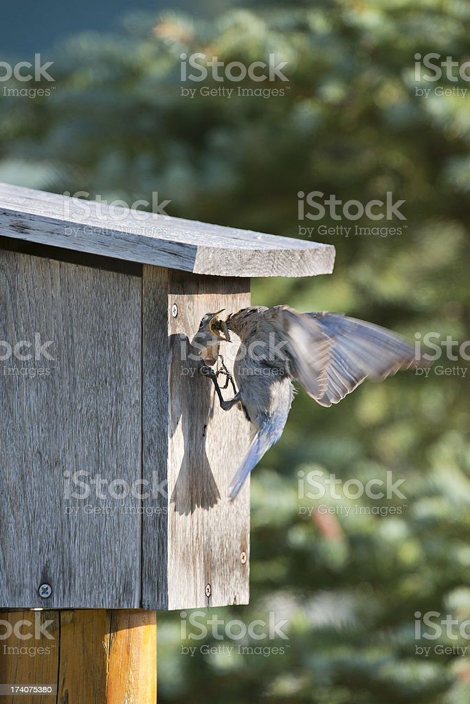 Feed me more royalty-free stock photo