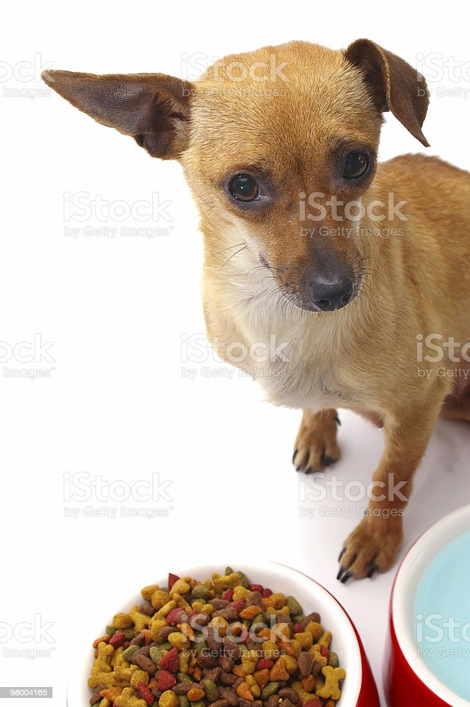 Feed Me royalty-free stock photo