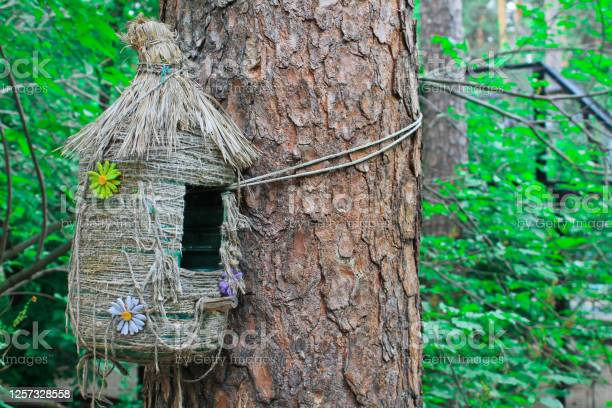 Feeder Decorative House For Birds And Squirrels Summer Forest Stock Photo - Download Image Now