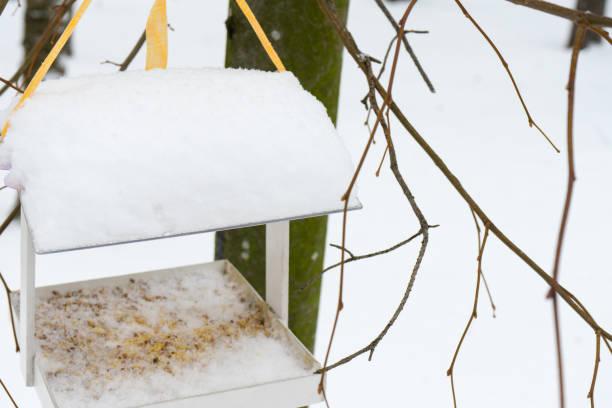 zubringer für vögel in den winterwald. - meisenknödel stock-fotos und bilder