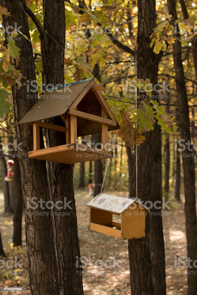 Feeders for birds in autumn oak forest stock photo