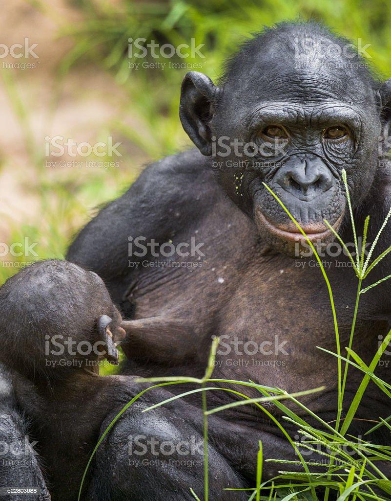 Feeding a baby stock photo