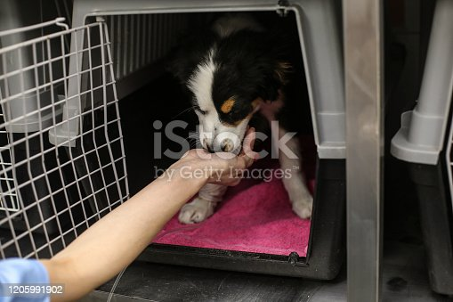 Mid adult woman working as a veterinary, feeding a dog. Unrecognizable Caucasian female.