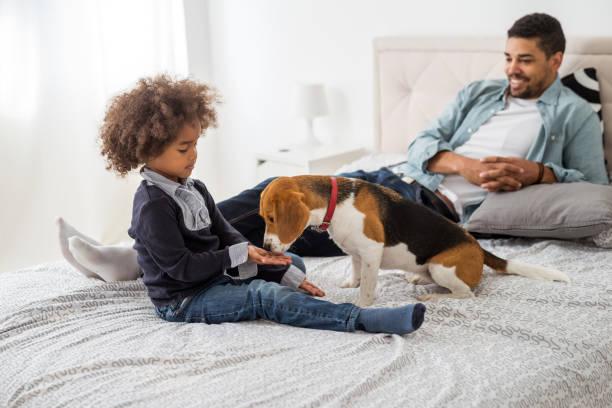 alimentación de un perro - alimentar a tu perro fotografías e imágenes de stock