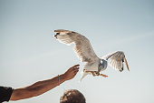 A hand handing some food to a seagull