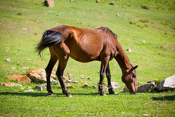 Feeding bay horse stock photo