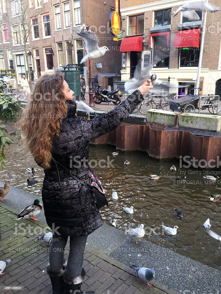 Feeding birds in Amsterdam stock photo