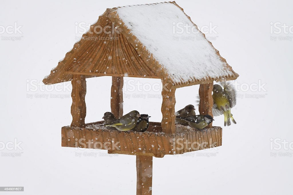 feeding birds in winter time royalty-free stock photo