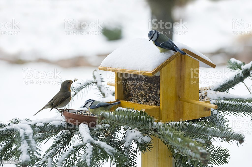 Feeding Birds in Wintertime stock photo