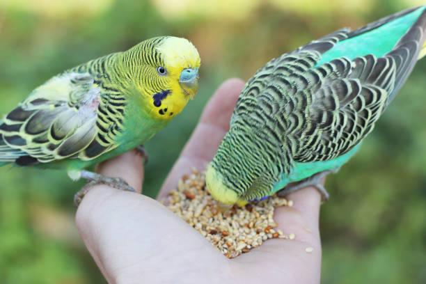 Feeding birds picture id928066580?b=1&k=6&m=928066580&s=612x612&w=0&h=mcdl8n9a4tl0s9xwljo4lq qcnjohiuamkag8cupjso=