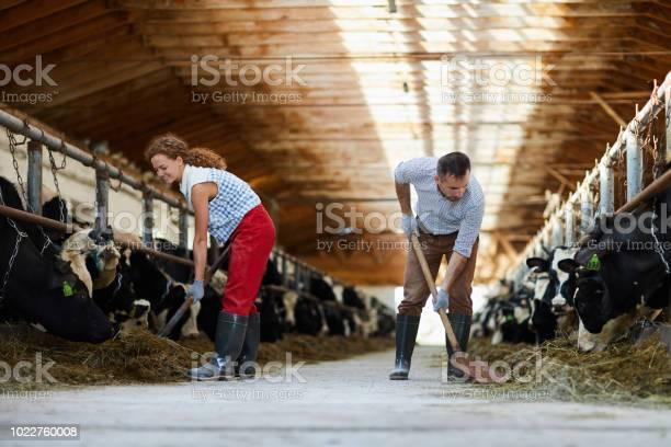 Feeding cows with hay picture id1022760008?b=1&k=6&m=1022760008&s=612x612&h=jw4bcpjaadtdysrjaubjhljinwoplsje5td09rmzsvw=
