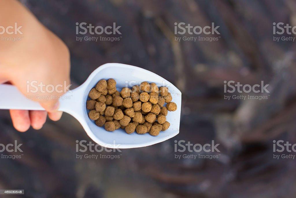 Feeding fish at the river stock photo