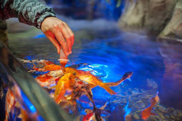 Fischernte im Aquarium – Foto