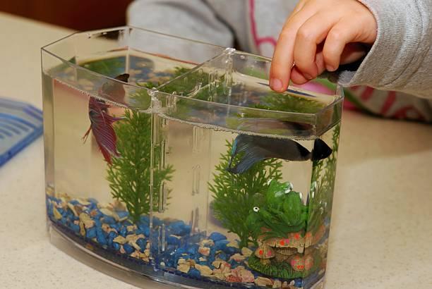 feeding fish stock photo