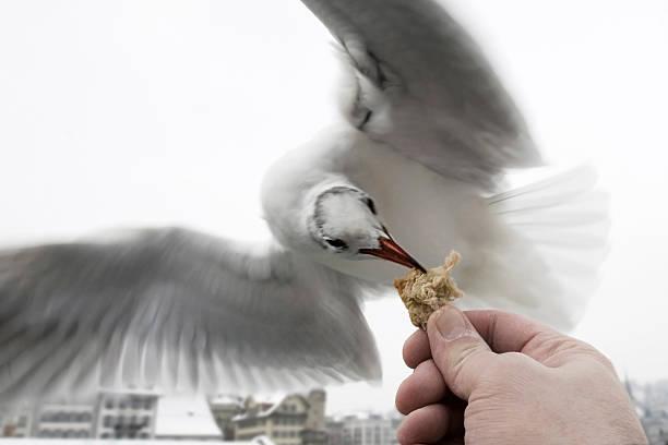 Feeding flying bird stock photo