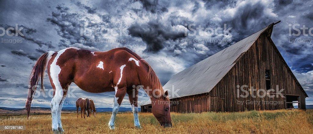 Feeding Horses stock photo