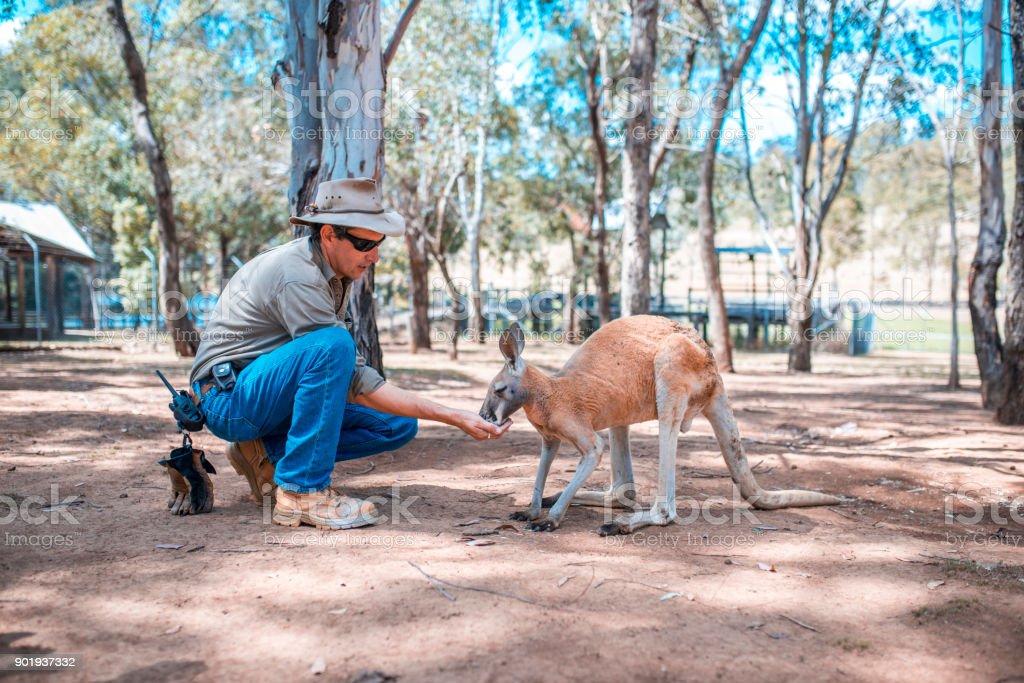 Kängurus füttern – Foto