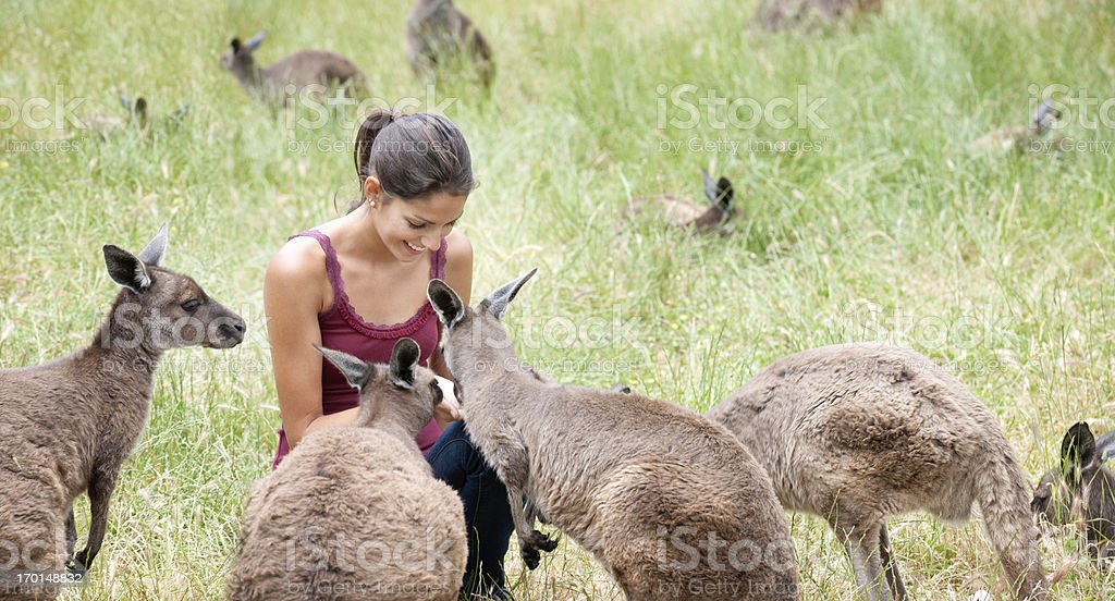 Feeding Kangaroos in the Wild stock photo
