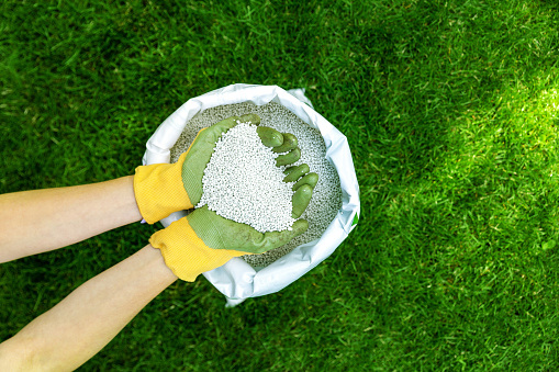 feeding lawn with granular fertilizer for perfect green grass