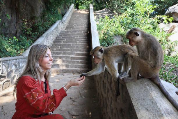 Feeding monkeys stock photo