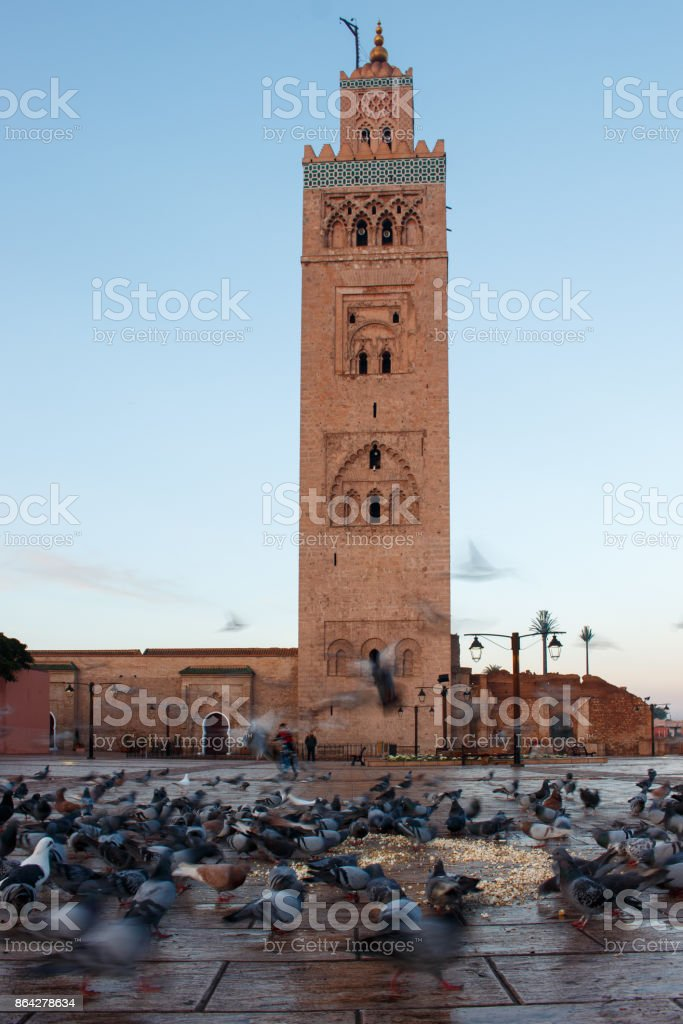Feeding of doves at the Koutoubia-Mosque in Marrakesh royalty-free stock photo