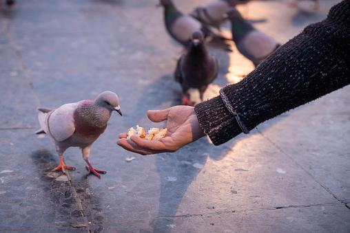 feeding pigeons in plaça catalunya, Barcelona, Spain