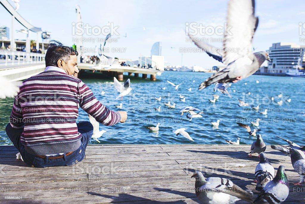 Feeding pigeons. royalty-free stock photo