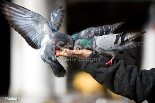 Feeding Pigeons St. Mark's Square Venice