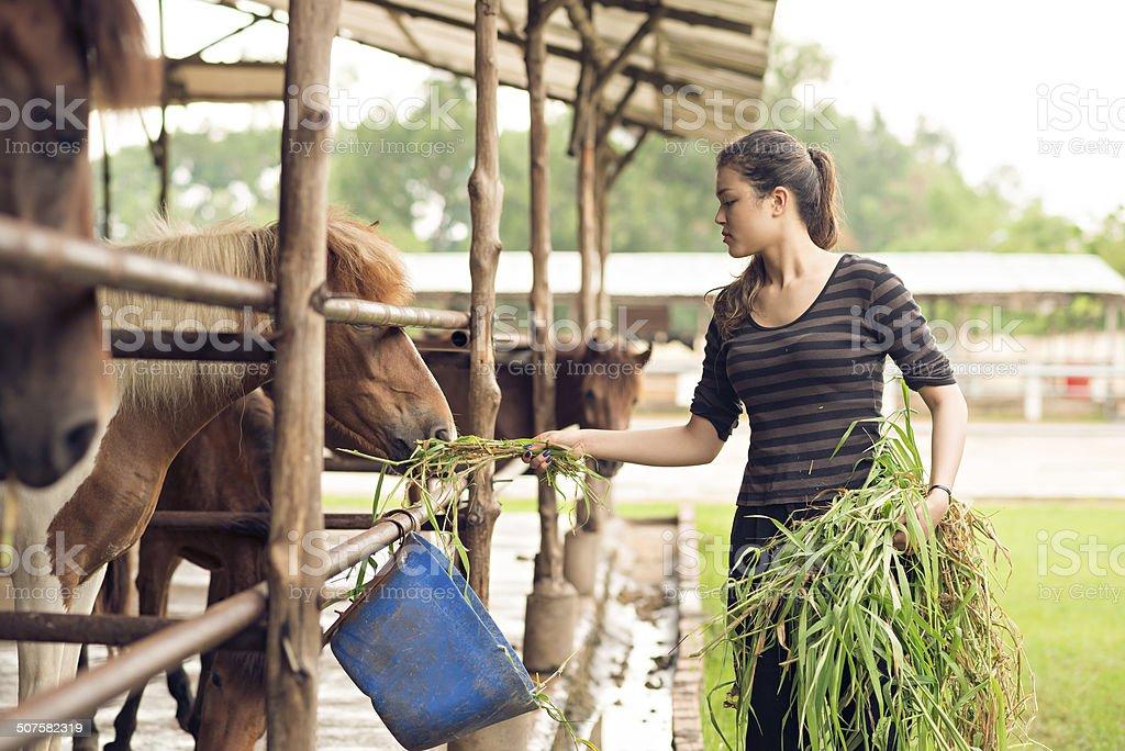 Feeding ponies stock photo