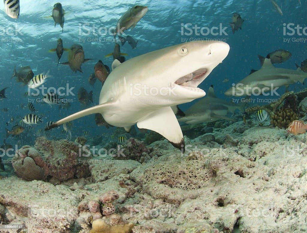 feeding shark stock photo