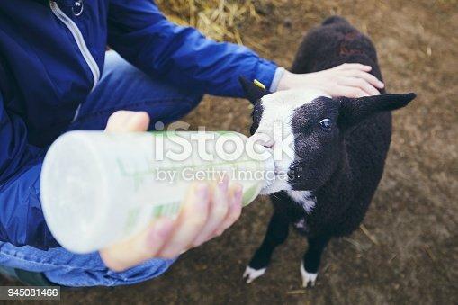 istock Feeding small lamb 945081466