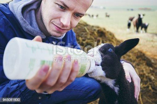 istock Feeding small lamb 945081830