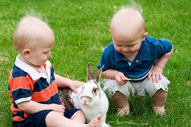 feeding the bunny stock photo