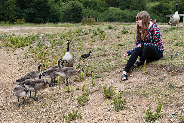 latvian outdoor girl feeding geese on mitcham common - whiteway latvian outdoor girl stock photos and pictures
