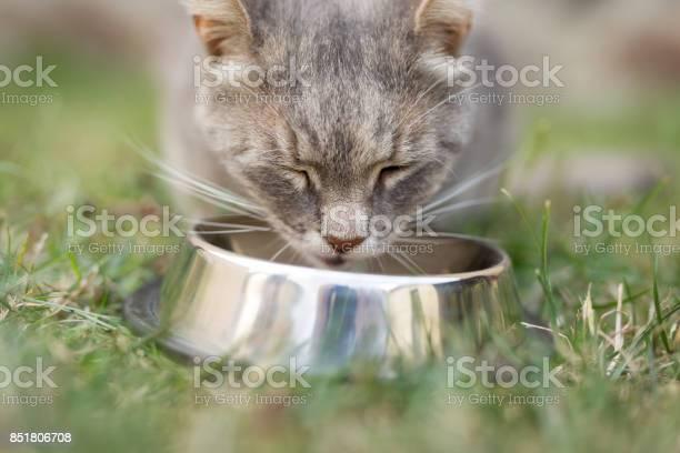 Feeding the cat picture id851806708?b=1&k=6&m=851806708&s=612x612&h=vhbasmpdlrpcsyfatfnfn6 ksjnl9qpsoq 7khp7tda=