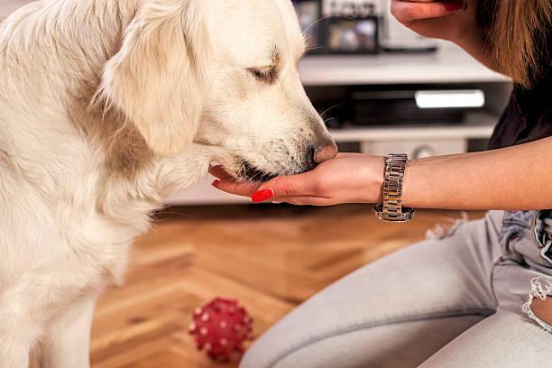 feeding the dog - genot stockfoto's en -beelden