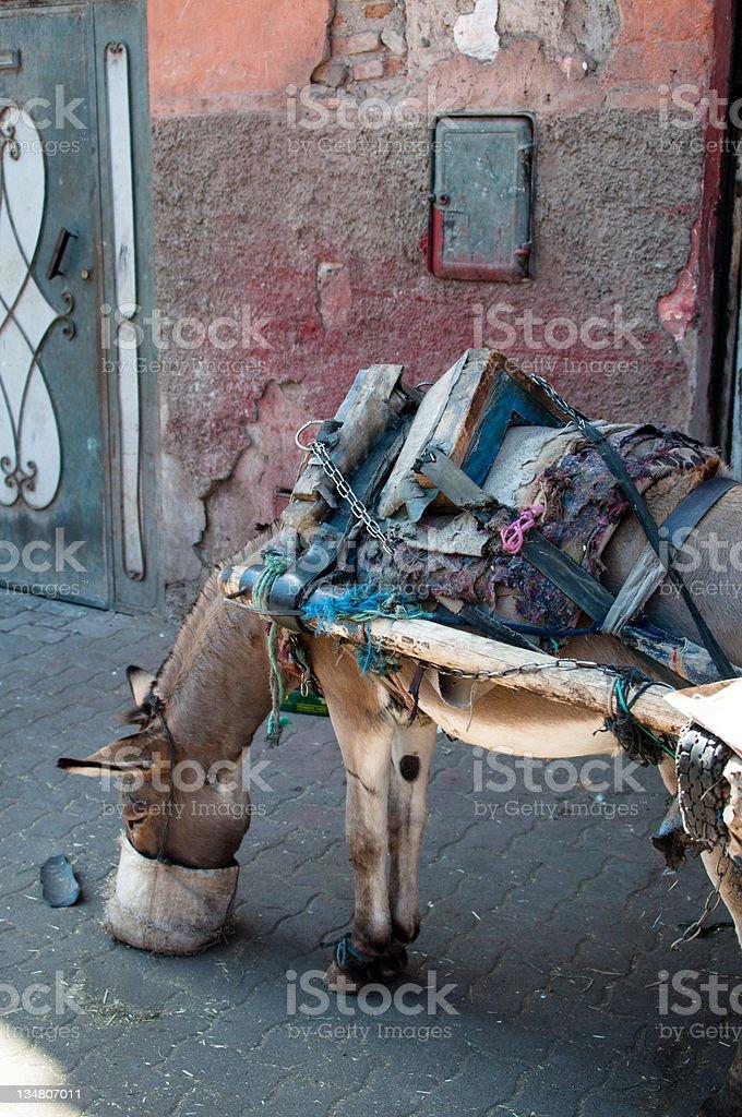 Feeding The Donkey royalty-free stock photo