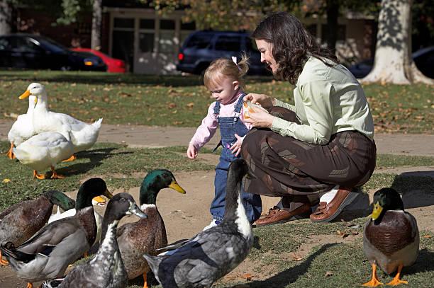 Feeding The Ducks 2 stock photo