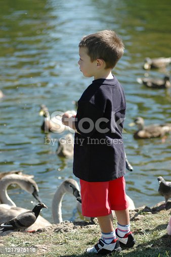 A little boy wearing red shorts and a Navy T-shirt, feeding the ducks in mid-thought.