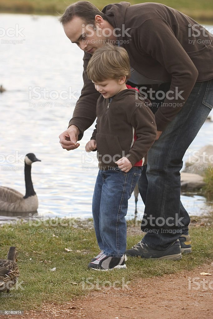 Feeding the Ducks royalty-free stock photo