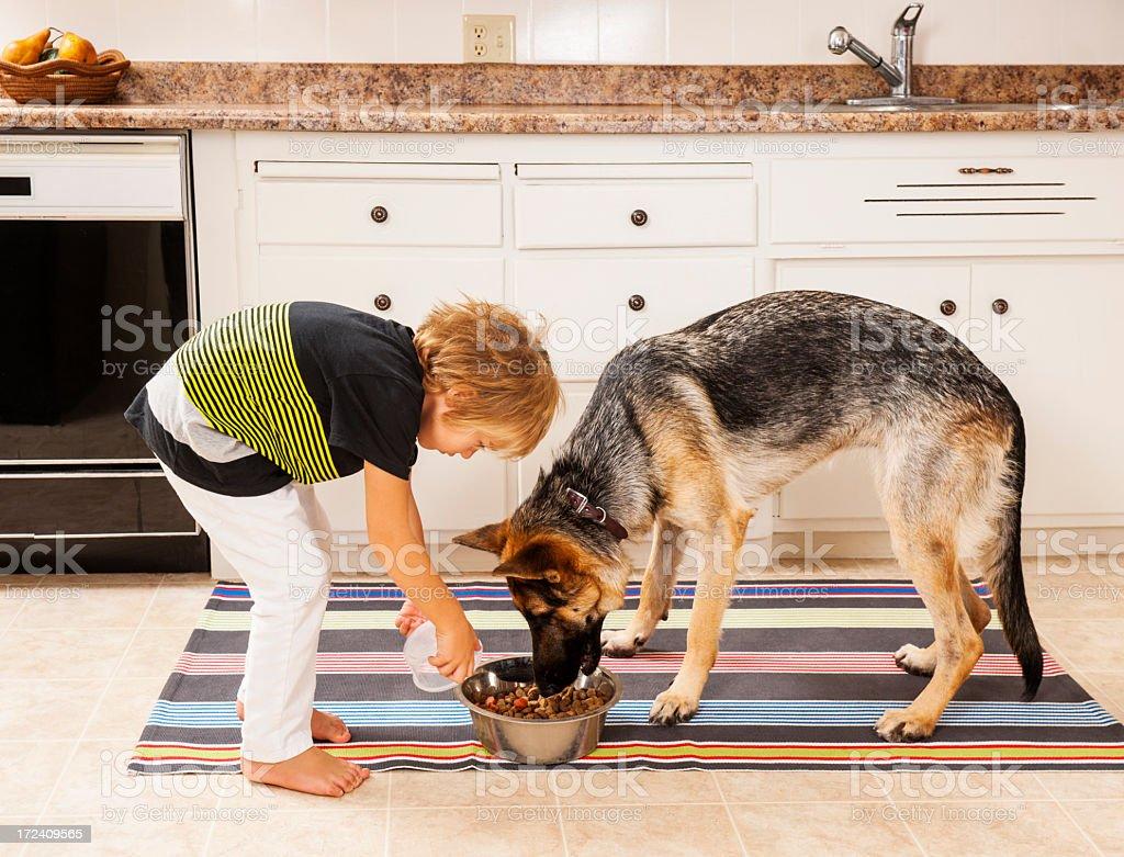 Feeding the family dog stock photo