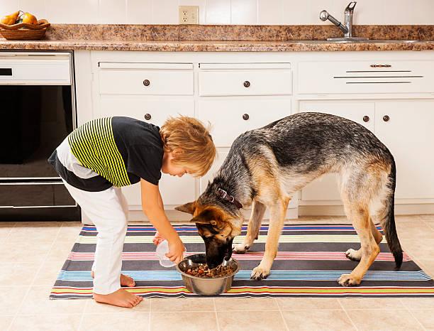 füttern hund - füttern stock-fotos und bilder