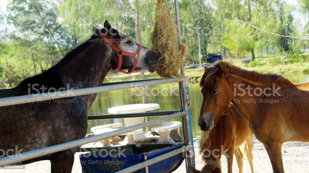 Feeding the horse royalty-free stock photo