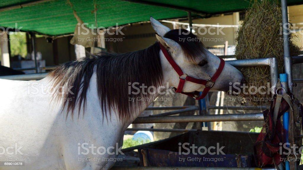 Feeding the horse stock photo