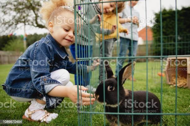Feeding the pet rabbit picture id1089670454?b=1&k=6&m=1089670454&s=612x612&h=pnuquf8xyr8uxkam7ecwsfiglgofnuv4sj8smfs0rbq=