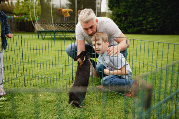 feeding the pet rabbit - playpen stock pictures, royalty-free photos & images
